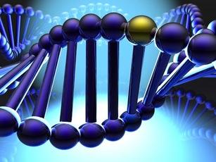 Ученые создали первый всеобъемлющий атлас генов человека
