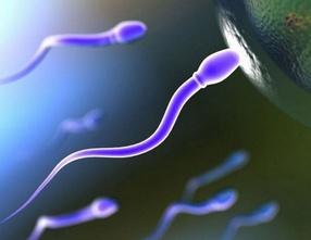 Как происходит процесс зачатия?