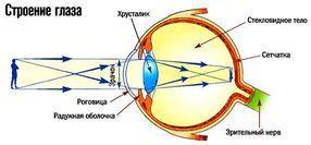 Как работает глаз человека?