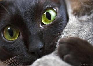 Кошачие экскременты могут помочь лечить рак