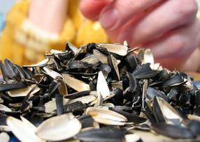 Вредно ли много грызть семечки?