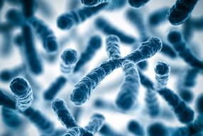 X - хромосома влияет на разницу роста мужчины и женщины