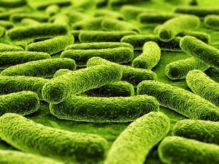 Живущие на коже бактерии помогают заживлению ран